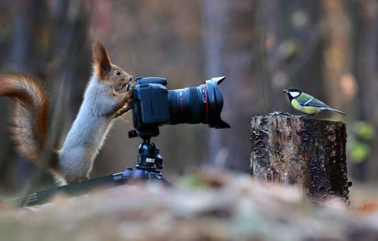 Ecureuil photographe