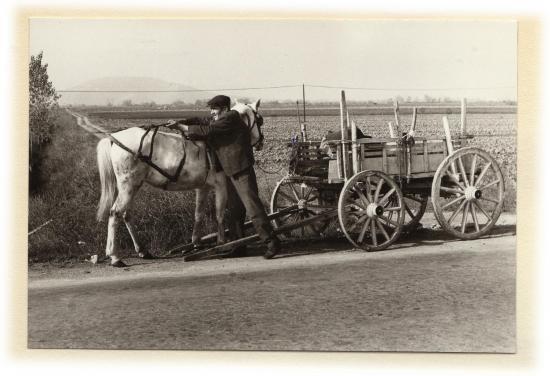 1978 larissa cheval chariot 3