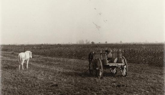 1978 larissa cheval chariot 4