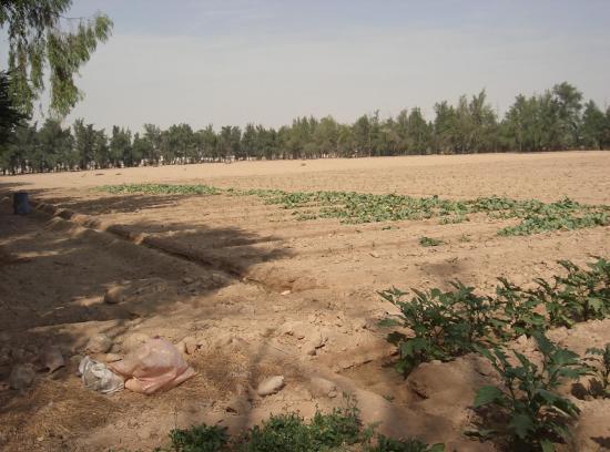7 qatar ferme cimg2629