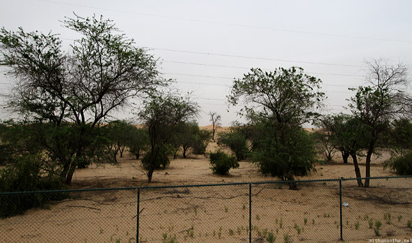 Al ain to abu dhabi highway trees