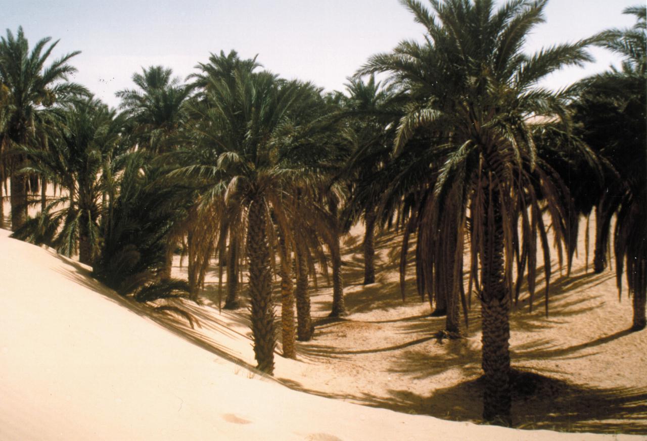 dunes-desert1.jpg