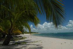 Ile palmiers